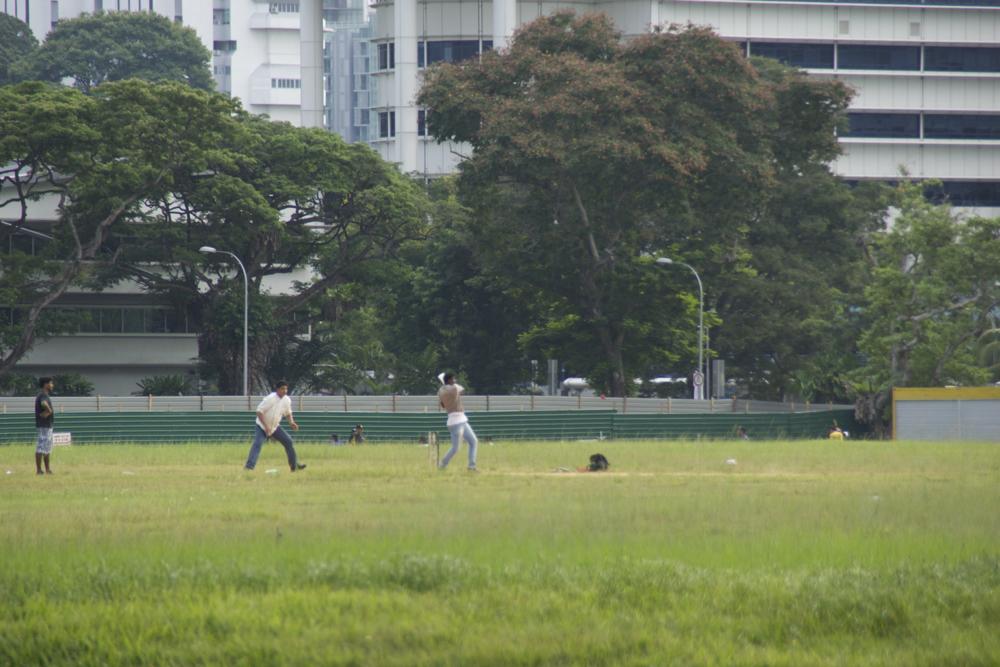 29 cricket.jpg