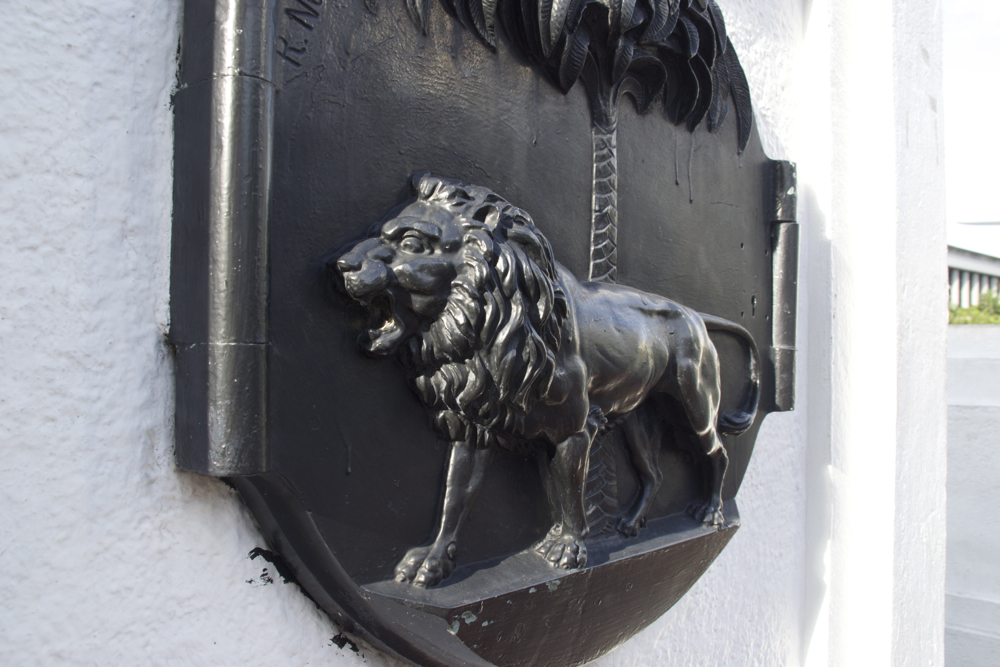 16 lion.jpg