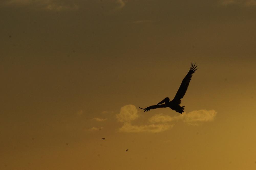 21 bird 1.jpg