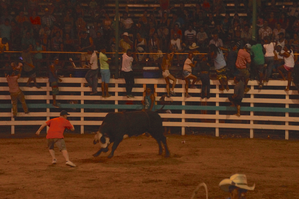 The dude in orange got absolutely trucked by this bull.