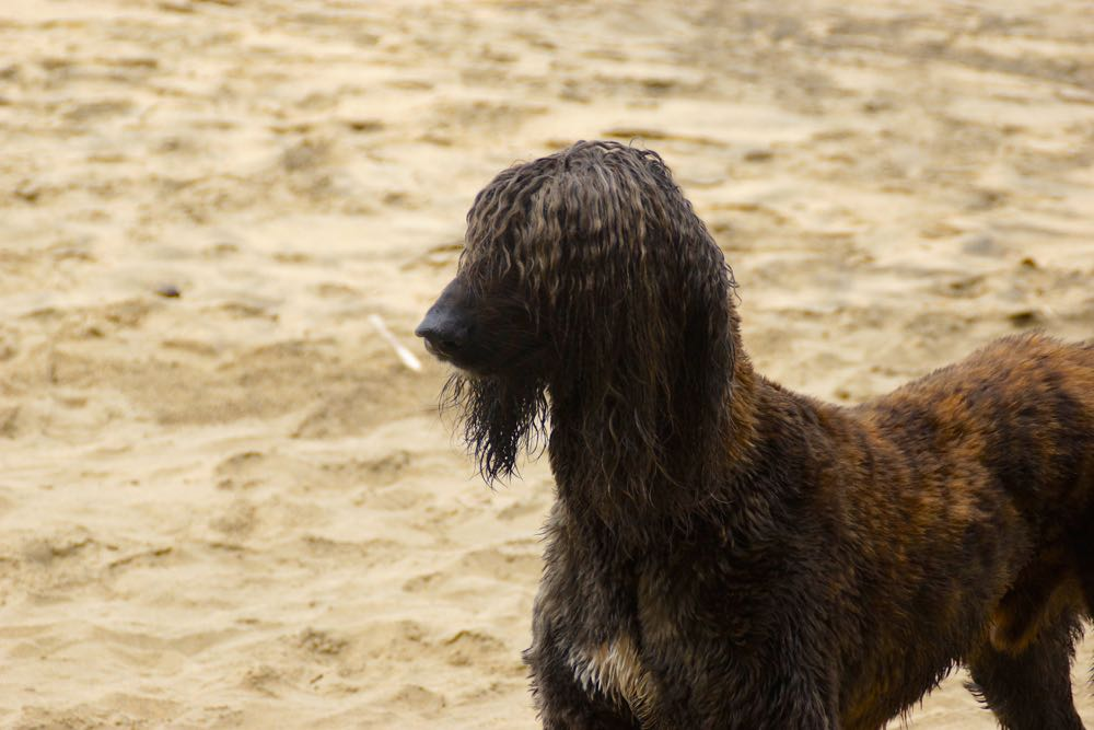 8 rock dog-2.jpg