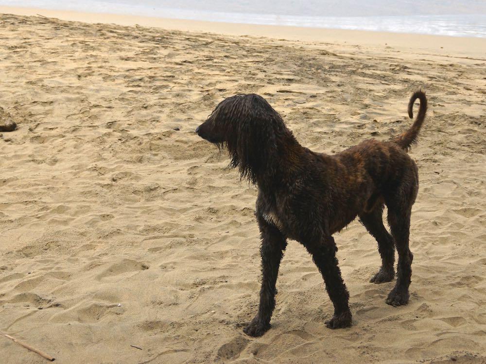 8 rock dog.jpg