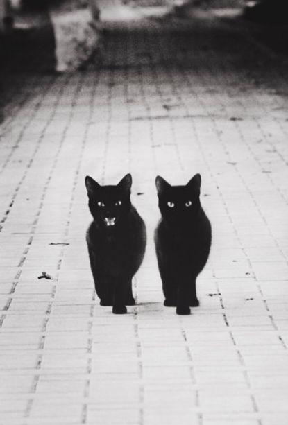 two black cats.jpg