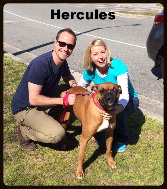 hercules3.jpg