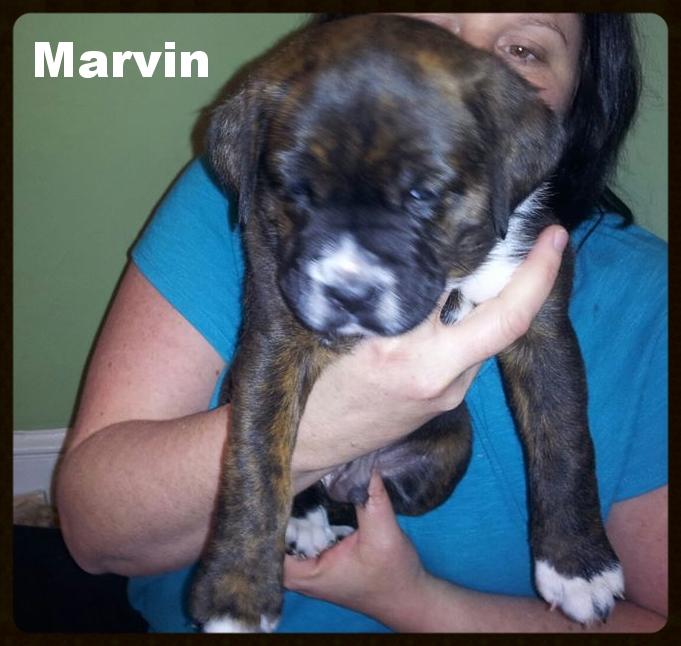 stella puppy marvin.jpg