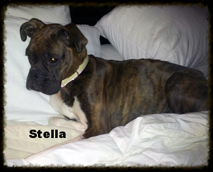 Stella Bella.jpg