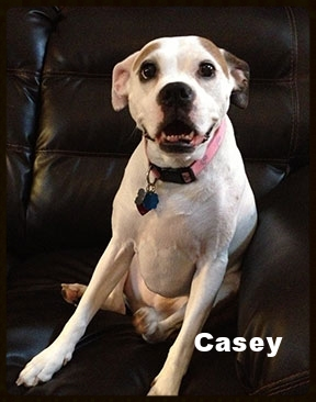 Casey3.jpg