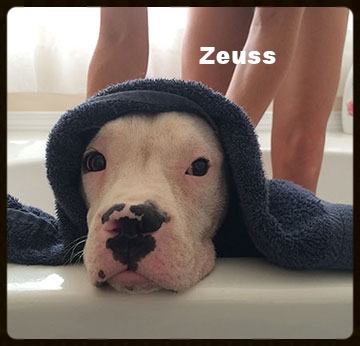 zeuss-web.jpg