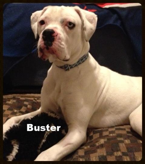buster2.jpg