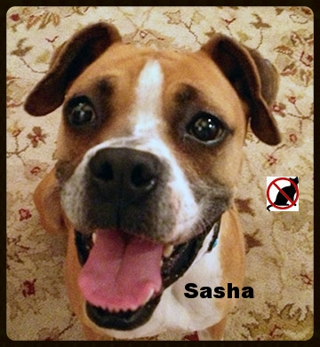sasha-new-web.jpg
