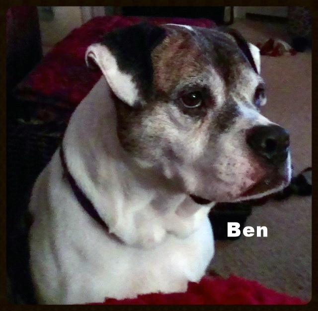 ben headshot.jpg