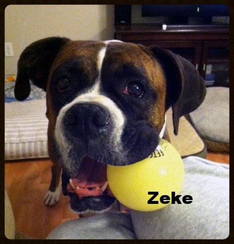 zeke-7.jpg