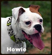 howie 2.jpg
