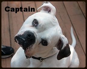 captain.jpg