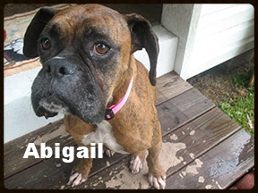 Abigail-8-008.jpg