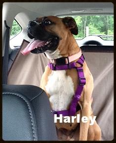 harley new 2.jpg