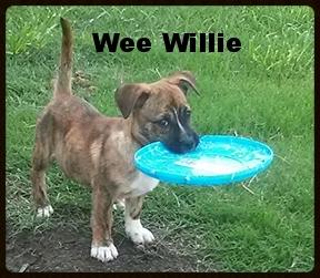 wee willie.jpg