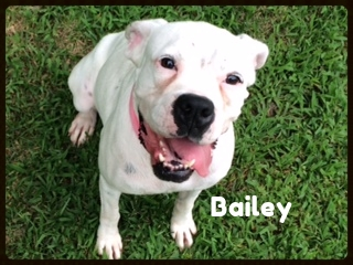 bailey 2.jpg