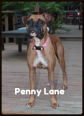 penny lane 2.jpg