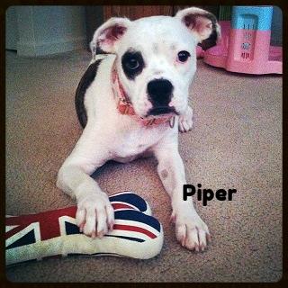 piper new.jpg