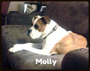 molly 4.jpg