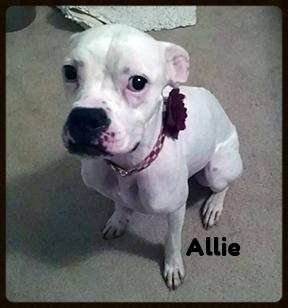 allie 2 new 3.jpg