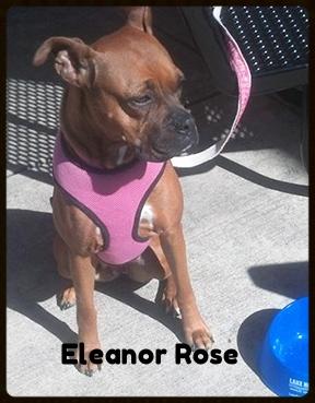 Eleanor Rose.jpg