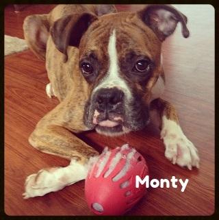 monty.jpg