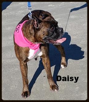 daisy 7.jpg