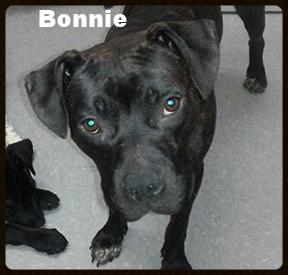 bonnie 6.jpg