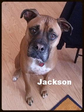 jackson foster.jpg