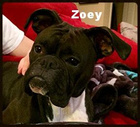 ZOEY NEW.jpg