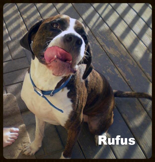rufus lick.jpg