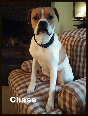 chase_front.jpg