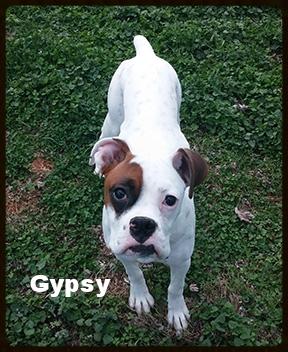 gypsy 1.jpg