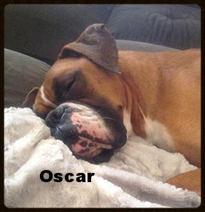 oscar new 2.jpg