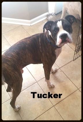 tucker new 2.jpg