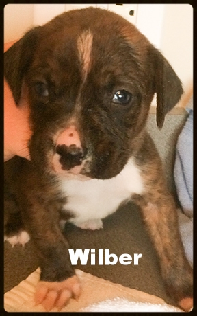 sally pup #5.jpg