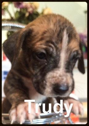 sally pup trudy.jpg