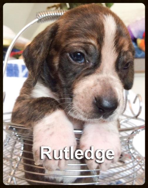sally pup rutledge.jpg