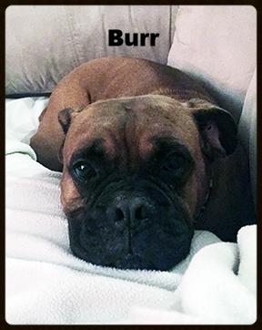 burr face.jpg