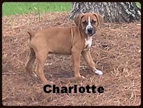 puppy charlotte.jpg