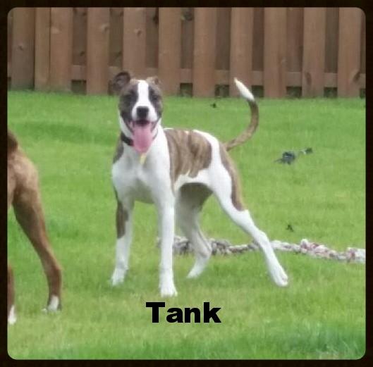 tank puppy.jpeg