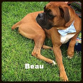 beau new a1.jpg