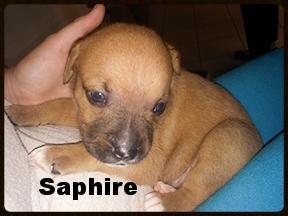 sapphire6.jpg