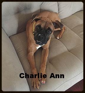 charlie ann 1.jpg