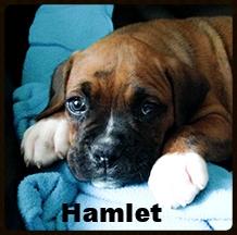 hamlet 2.jpg