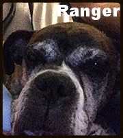 ranger new cute.jpg