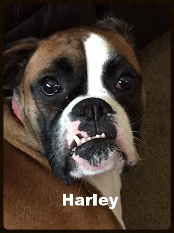 harley new a 1.jpg