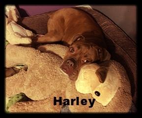 harley+new+b+1.jpg